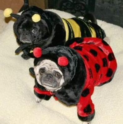 Beedog and LadyBug