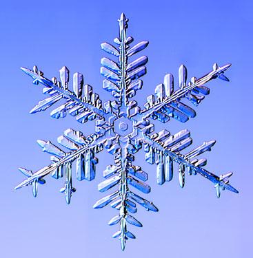 Fernlike stellar dendrite snowflake